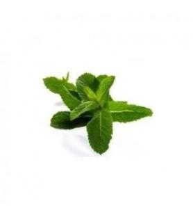 Fragrance mente-chlorophylle