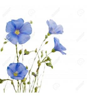 Fragrance fleur de lin